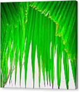 Under The Fan Palm Canvas Print