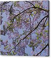 Under The Jacaranda Tree Canvas Print
