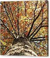 Under The Leaves Canvas Print