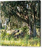 Under The Live Oak Tree Canvas Print