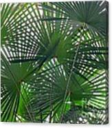 Under The Palm Tree Canvas Print