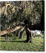 Under The Spreading Oak Tree Canvas Print