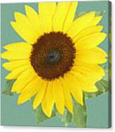 Under The Sunflower's Spell Canvas Print