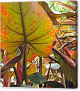 Under The Tropical Leaves Canvas Print