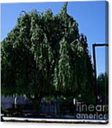 Under The Weeping Tree Canvas Print