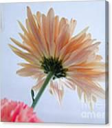 Underside Of Daisy Canvas Print
