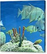 Underwater Beauty Canvas Print