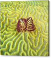 Underwater Christmas Trees Canvas Print