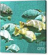 Underwater Fish Swimming By Canvas Print