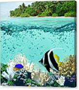 Underwater Life In Tropical Sea Canvas Print