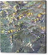 Underwater - Long Boat Tour - Phi Phi Island - 011325 Canvas Print