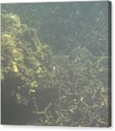Underwater - Long Boat Tour - Phi Phi Island - 011338 Canvas Print