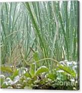 Underwater Shot Of Submerged Grass And Plants Canvas Print