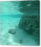 Underwater Tropical Island Photography Canvas Print
