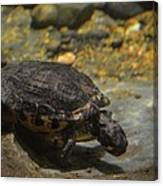 Underwater Turtle Canvas Print