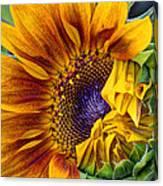 Unfurling Beauty - Cropped Version Canvas Print