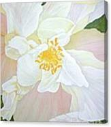 Unfurling White Hibiscus Canvas Print