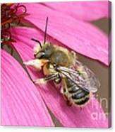 The Color Of Honey Canvas Print