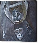 United - Western Lowland Gorillas Canvas Print