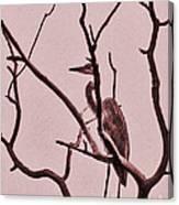 Unknown Bird Canvas Print