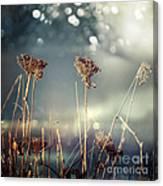 Unloved Flowers Canvas Print