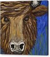 Untitled Buffalo 1 Canvas Print