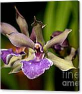 Unusual Orchid Canvas Print