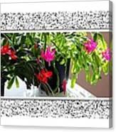 Unusual Simultaneous Bloomers 2 Canvas Print