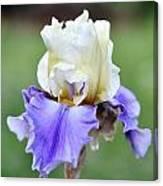 Up Close Elegant Iris Canvas Print
