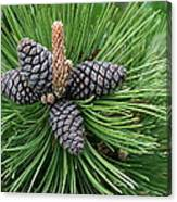 Up Cone Canvas Print