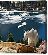 Up From The Lake Canvas Print