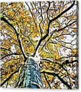 Up Into The Tree Canvas Print
