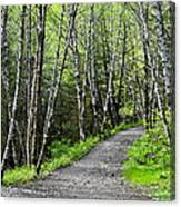 Up The Trail Canvas Print