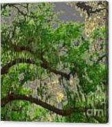 Up Through The Haunted Tree Canvas Print