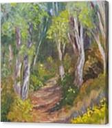 Uphill Path-batiquitos Canvas Print