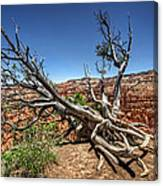 Uprooted - Bryce Canyon Canvas Print