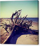 Uprooted Tree On The Beach Canvas Print