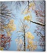 Upside down autumn Canvas Print