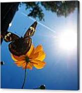 Upside Down Butterfly Canvas Print