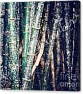 Urban Bamboo Canvas Print