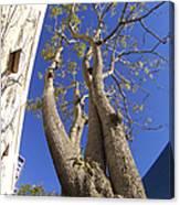 Urban Trees No 1 Canvas Print