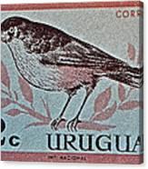 Uruguay Bird Stamp - Circa 1962 Canvas Print