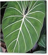 Us Botanic Garden - 121212 Canvas Print