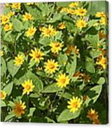 Us Botanic Garden - 121220 Canvas Print