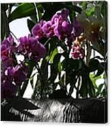 Us Botanic Garden - 121231 Canvas Print