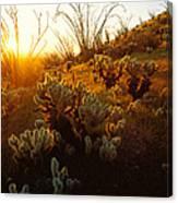 Usa, Arizona, Sonoran Desert, Ocotillo Canvas Print