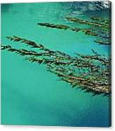 Usa, California, Seaweed Floating Canvas Print