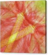 Usa, Hawaii Anthurium Flower Montage Canvas Print