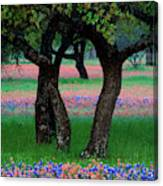 Usa, Texas, Hill Country, Texas Canvas Print