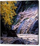 Utah - Zion National Park Virgin River 8 Canvas Print